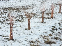 Little decorative trees Royalty Free Stock Photography