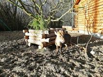 Little deer on a home farm. Little deer eat green grass on the farm. Beautiful animals stock photo