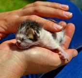 Little defenseless kitten looking for a home and care stock photo
