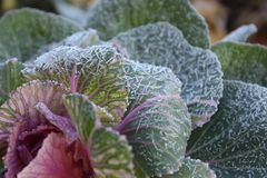 Ice on plant early in autumn stock photography