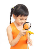 Little detective. Asian little girl looking flower with a magnifying glass stock photo