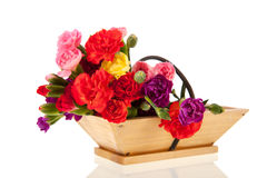 Little Dianthus in basket Stock Image