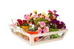 Little Dianthus on white tray Stock Photo