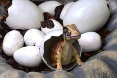 Little Dinosaur Stock Photos