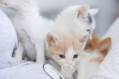Little dirty sick kittens in the shelter stock images