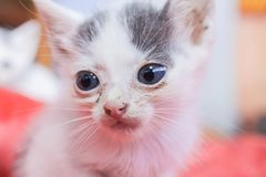 Little dirty sick kittens in the shelter stock photography