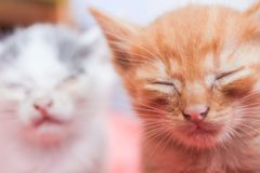 Little dirty sick kittens in the shelter royalty free stock photo