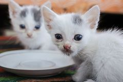Little dirty sick kittens in the shelter royalty free stock images