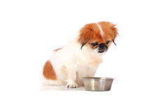Little dog. Stock Photography