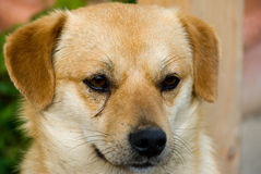 A little dog Royalty Free Stock Image