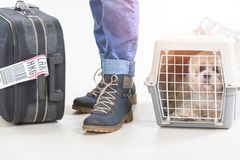 Little dog in the airline cargo pet carrier. Waiting at the airport after a long journey Royalty Free Stock Photos