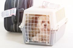 Little dog in the airline cargo pet carrier Royalty Free Stock Photography