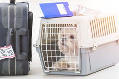 Little dog in the airline cargo pet carrier Stock Images