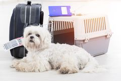 Little dog and the airline cargo pet carrier. Little dog waiting at the airport after a long journey with airline cargo pet carrier and his owner luggage in the Stock Image