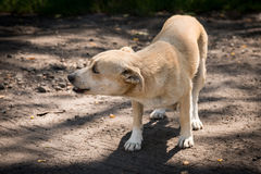 Little Dog alone. Little poor dog alone in a forest Royalty Free Stock Image