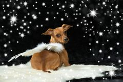 Little dog with angel wings Stock Image