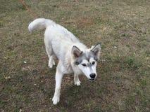Little dog. Animal, domestic, beautifull Royalty Free Stock Photos