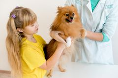 Dog with a vet. Little dog on appointment with a vet royalty free stock photos