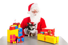 Little dog as gift for Christmas Stock Image