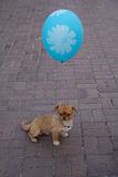 Little dog with a balloon on a city street Stock Photo