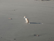 Little dog on the beach Stock Images
