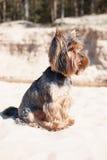 Little dog on the beach Stock Photos