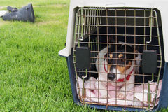Little dog in a box. On the green grass Stock Photography