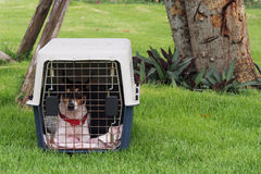 Little dog in a box. On the green grass Royalty Free Stock Photo