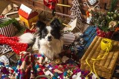 Little dog Christmas card Stock Photography