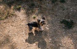 A little dog walking along the sandy street royalty free stock photos