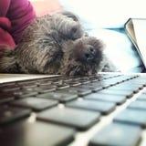 Little dog doing hard work Stock Photo