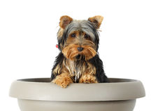 Little dog in flower pot Stock Images