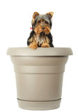 Little dog in flower pot Stock Photography