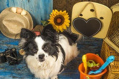 Little dog goes on vacation Stock Photography