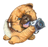 A little dog holding a camera Royalty Free Stock Photography