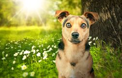 Little dog looking outdoor in the nature. Or forest Royalty Free Stock Photos