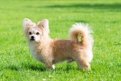 Little dog lying on the grass stock photos