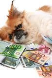 Little dog and money. Royalty Free Stock Image