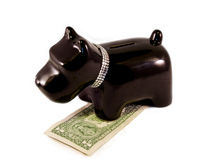 Little dog moneybox. Doggy moneybox with a diamond necklace Stock Photo