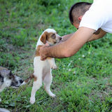 Little dog portrait Stock Image