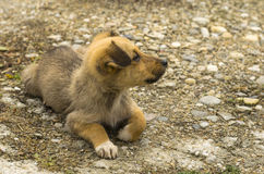 Little dog resting. Cute little dog sitting and looking sideways Royalty Free Stock Photos