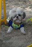Little dog on the sand. Little dog have funny on the sand stock photos