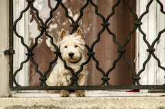 Little dog. Sits behind bars Stock Images