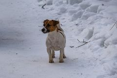 Little dog in the snow in the winter forest royalty free stock photography
