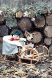 Little dog with snowman toy sitting in the wooden decorated sled, at wooden backgroung and waiting Santa. Symbol of new year 2018 Royalty Free Stock Photos