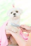 Little dog at spa Stock Photos