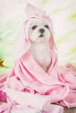 Little dog at spa Royalty Free Stock Photography