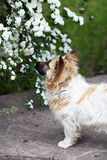 Little dog in the spring time Stock Photo