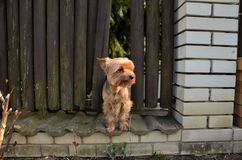 Little Dog standing alone Stock Photo