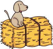 Little dog up on bale of hay Stock Photography